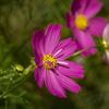 DSC01010. 咲けよ匂えよ