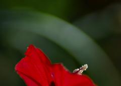 サークルラインと赤い花.