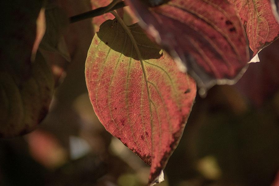 DSC00887. 木の葉も語らう