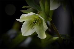 DSC02240 花の素顔-1