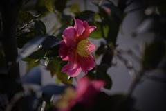 DSC02162 春の予感