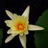 DSC03540. 温室の花-2