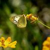 DSC01063. 花と蝶-1