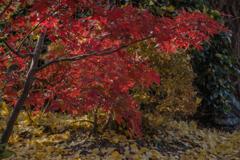 DSC01062 参道の紅葉