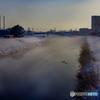 DSC01965 霧に戸惑う鴨の群れ