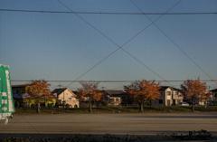 DSC00735 早朝晩秋の公園