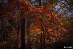 DSC01253 静かな森の中