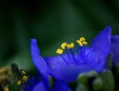 DSC02431.紫と蜂 (再構築)