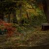 DSC09813 森の長椅子