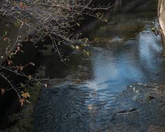 神田川 川面に映る秋の空