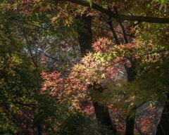 DSC01337 平林寺の紅葉-2
