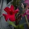 DSC00588. 花は咲く