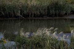 河原の秋模様