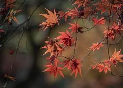 DSC01366  離愁それぞれの秋