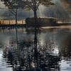 DSC07678-森は光芒の朝