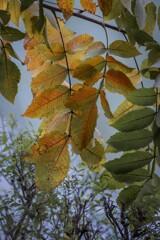 DSC01555. 公園の池に秋の気配 (再挑戦)
