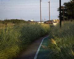 DSC04829. 夏の朝の散歩道