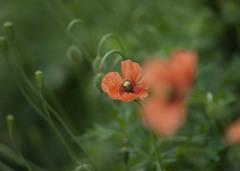 DSC01355 野に咲く花の名前は知らないjpg