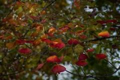 DSC01275 晩秋秋から冬へ