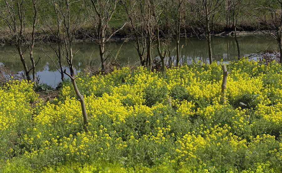 DSC00544 春の小川