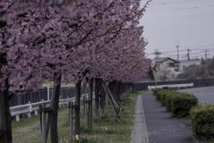 DSC04282.遊歩道jpg