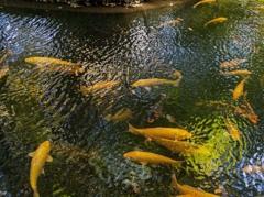 DSC05574 平林寺の池もよう