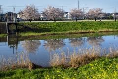 DSC01947 川面に桜