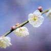 DSC05177. 春を待つ-2