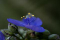 紫の花-7