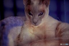 DSC06192-伊豆の猫園の猫-1