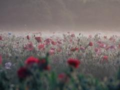 朝霧の中で咲く花