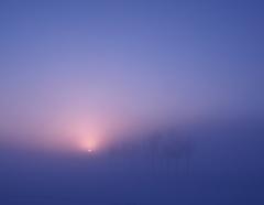 霧の中で見た夢