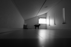 猫と屋根裏