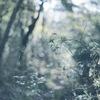 迷い込んだ森