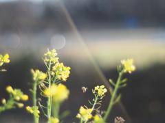 お花を撮りたくなって…