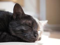 黒猫  corva