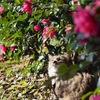 ピンクのお花に囲まれて