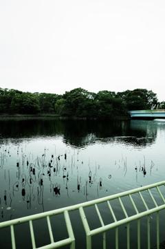 長居公園の池