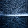 凍りつく森
