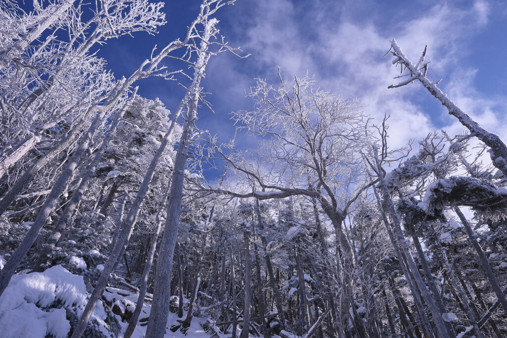 霧氷の森④