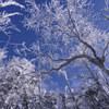 霧氷の森⑤