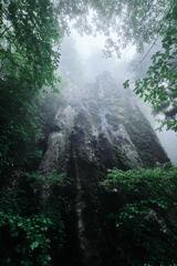 雨の森の大岩