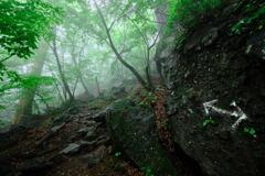 雨の森の道標