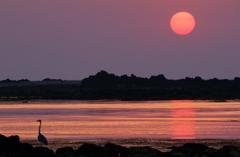 夕陽と鷺②