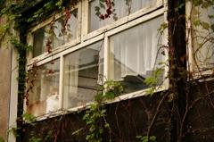 窓越しのランデヴー