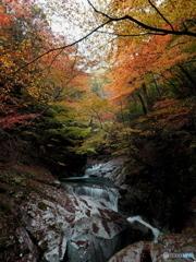秋彩色に染まる