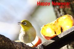 新年初鳥ピーちゃん