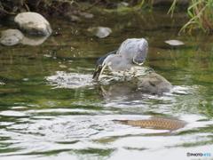 魚Get_03