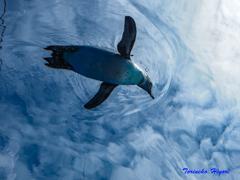 空飛ぶペンギン-