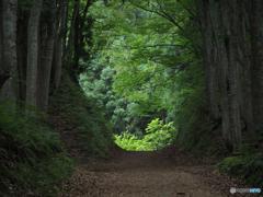 ブナ林の先